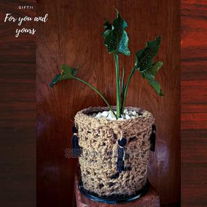 Handmade Planter With Natural Plant | Garden for sale in Addis Ababa, Yeka