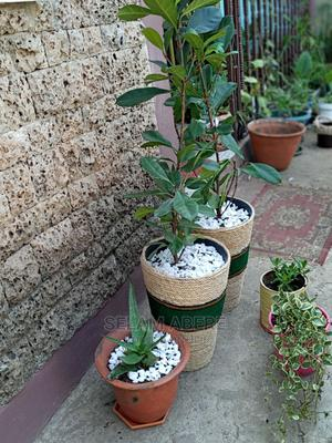 Handmade Planter With Plant | Garden for sale in Addis Ababa, Yeka