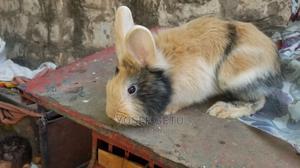 ቆንጆ ቆንጆ ጥንቸሎች | Other Animals for sale in Addis Ababa, Nifas Silk-Lafto