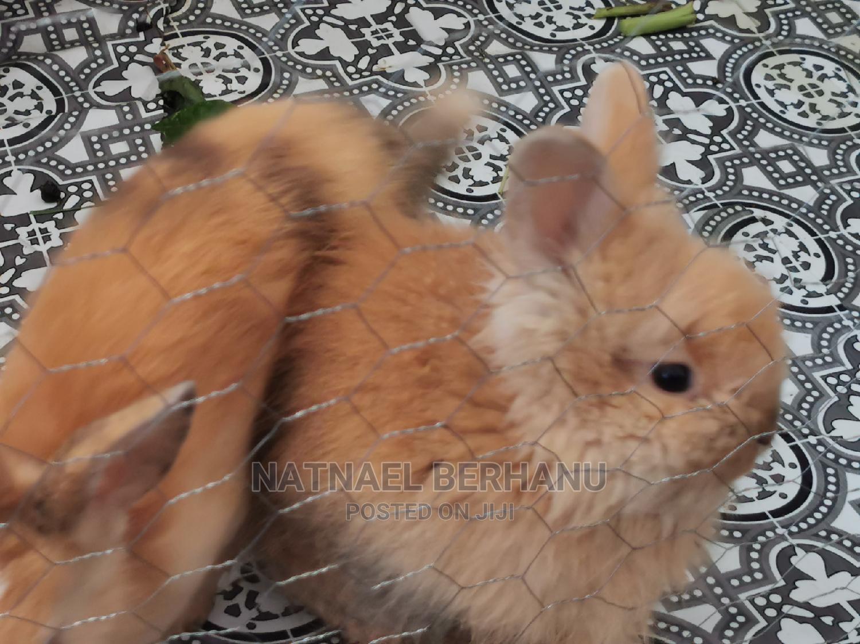 Archive: Rabbit 1M 3F