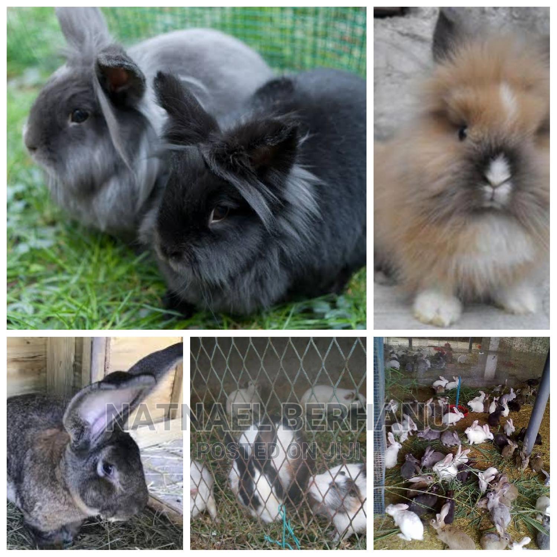 Archive: Rabbit for Sale