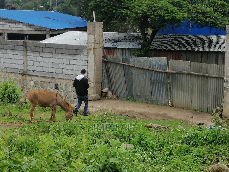 Land for Sale in Sebeta
