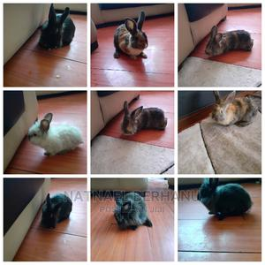 Rabbit 4M 5F | Livestock & Poultry for sale in Addis Ababa, Bole
