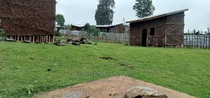 600km For Sale In Asela   Land & Plots For Sale for sale in Oromia Region, West Arsi