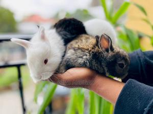 Rabbits for Sale | Other Animals for sale in Addis Ababa, Bole