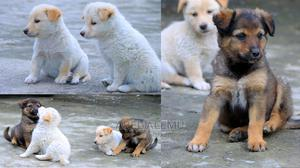 1-3 Month Female Mixed Breed Dog | Dogs & Puppies for sale in Addis Ababa, Nifas Silk-Lafto