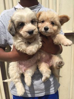 1-3 Month Female Purebred Airedale Terrier | Dogs & Puppies for sale in Addis Ababa, Kolfe Keranio